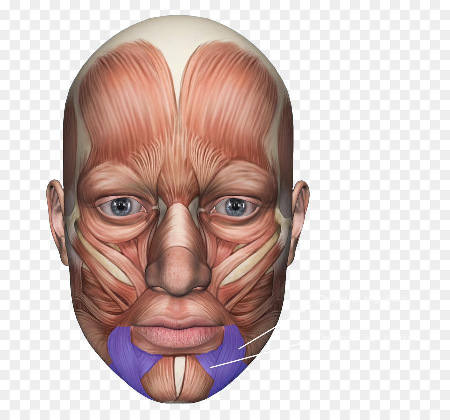 выручают мышцы лица фото картинки вопроса