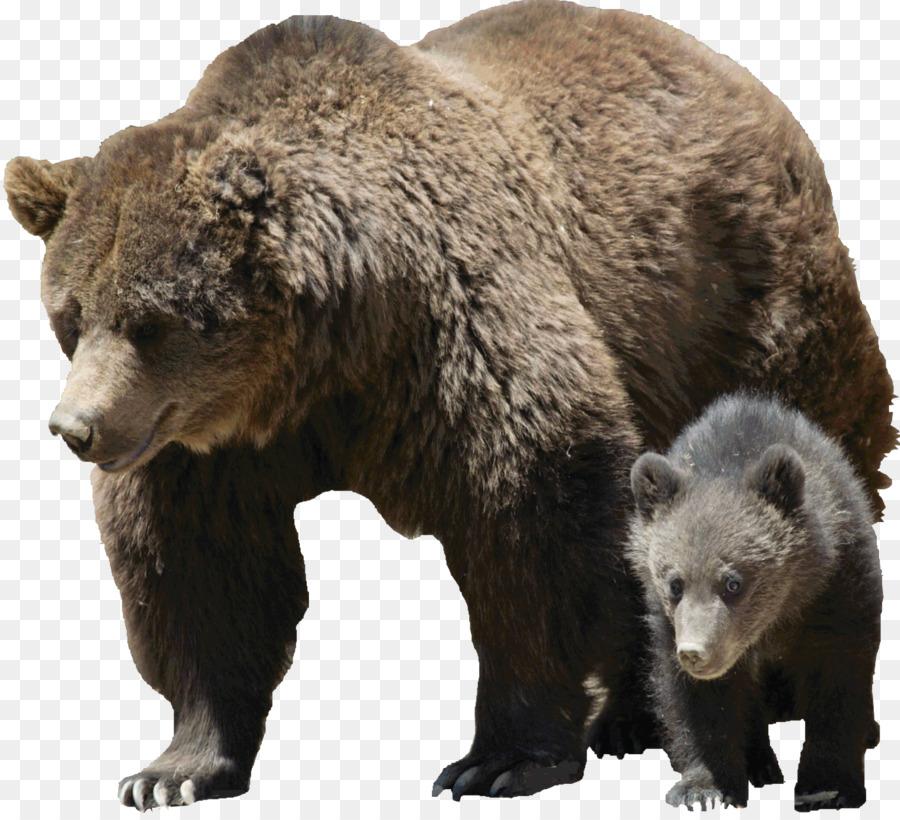 картинки для медведь на прозрачном фоне приготовленный