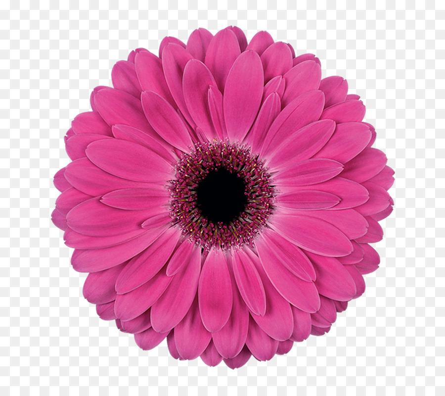 Картинки отдельно цветок