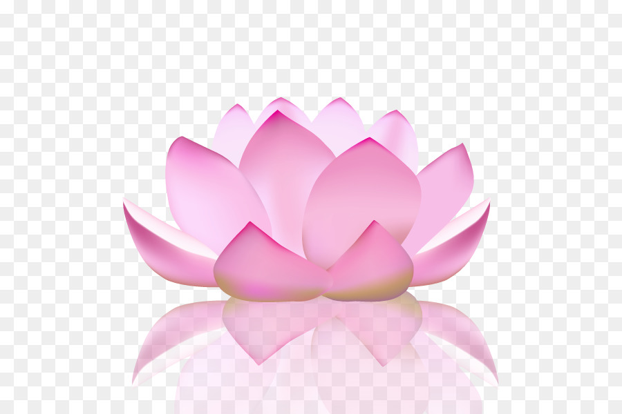 Лотос орехоносный, йога, цветок