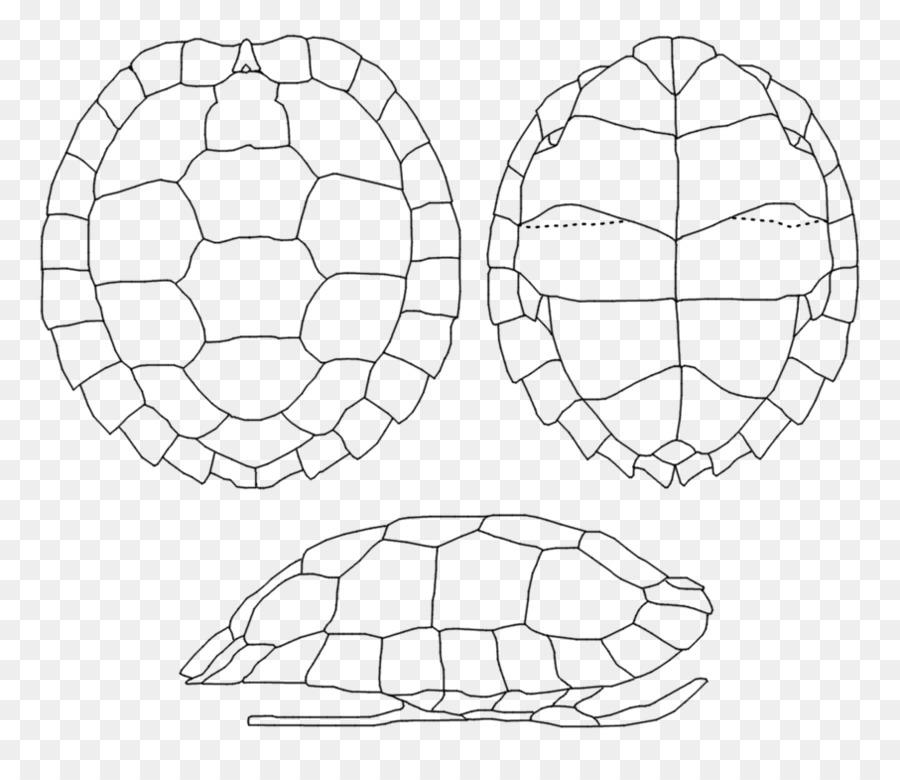 запечатлим панцирь черепахи картинки скажу, нем будет