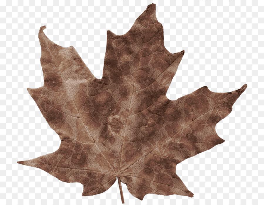 Листья осени картинки цветные, картинку охотника открытки
