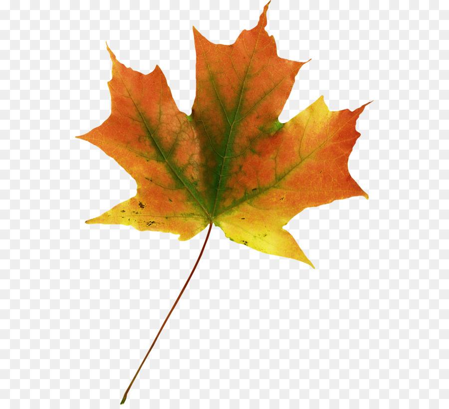 Кленовый лист картинка пнг