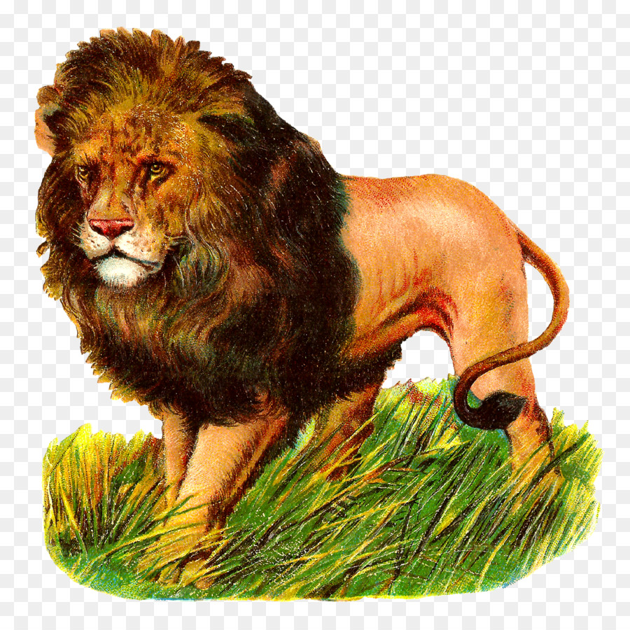 картинки лев для доу р-оне плотины