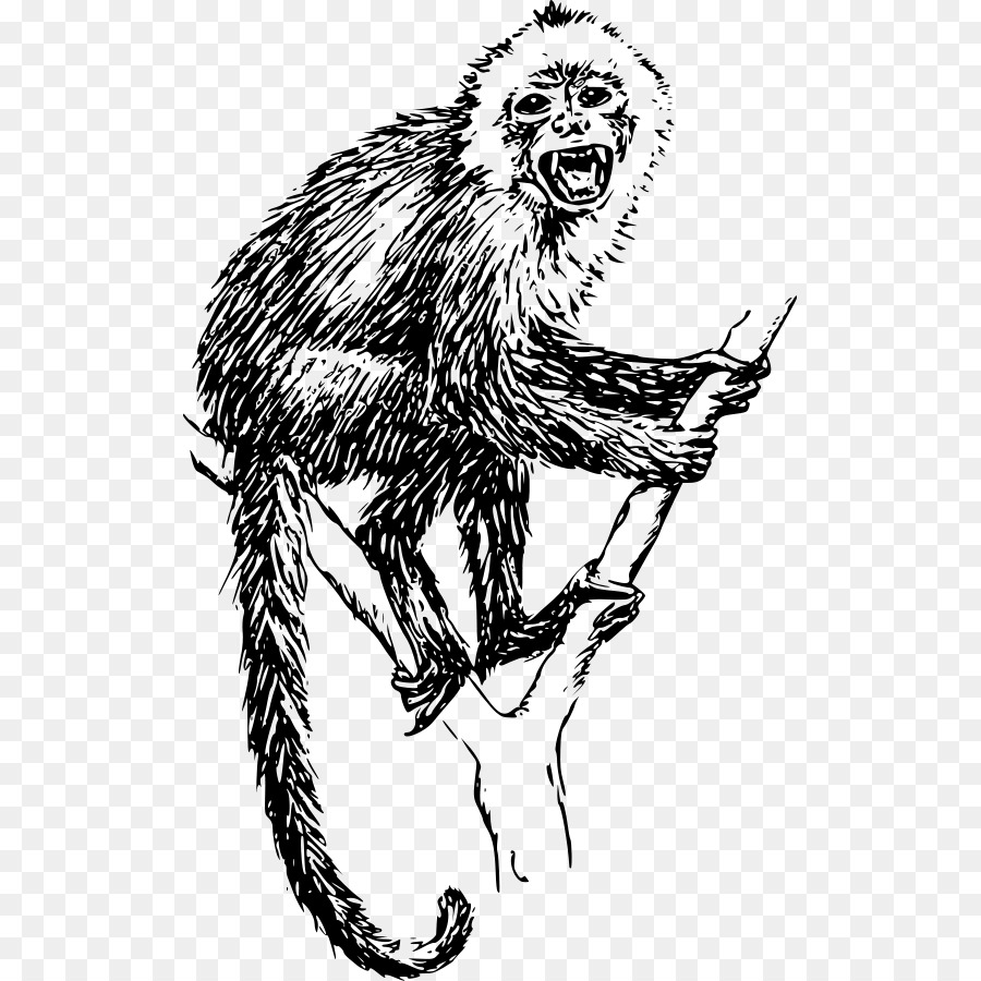 просто прикрепите обезьяна мимус картинки леди обязательно