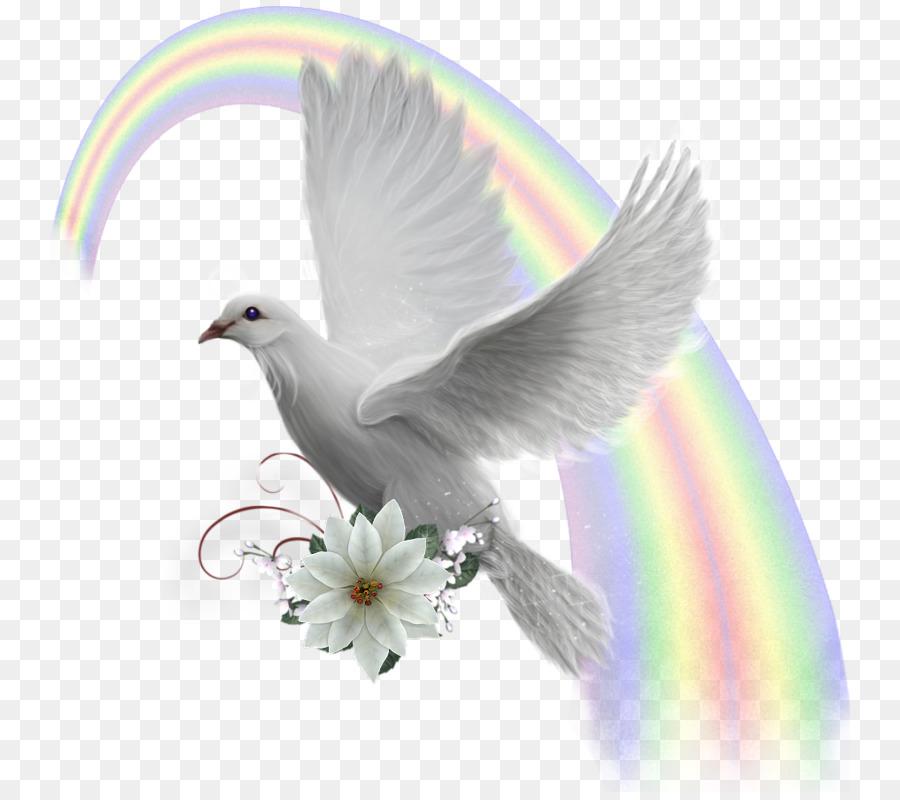 картинки голубь мира на прозрачном фоне