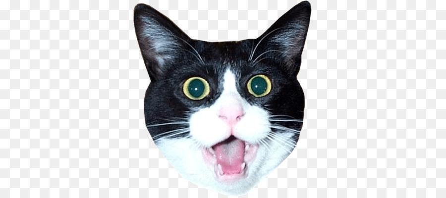 многочисленных картинка голова кошки на белом фоне играет ними