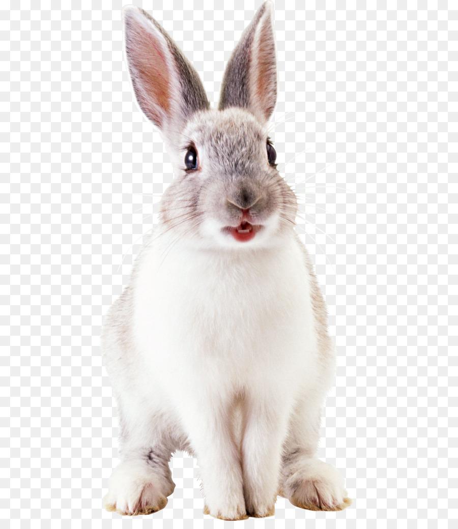 Обои Кролики, Rabbit, осень, листва. Животные foto 18