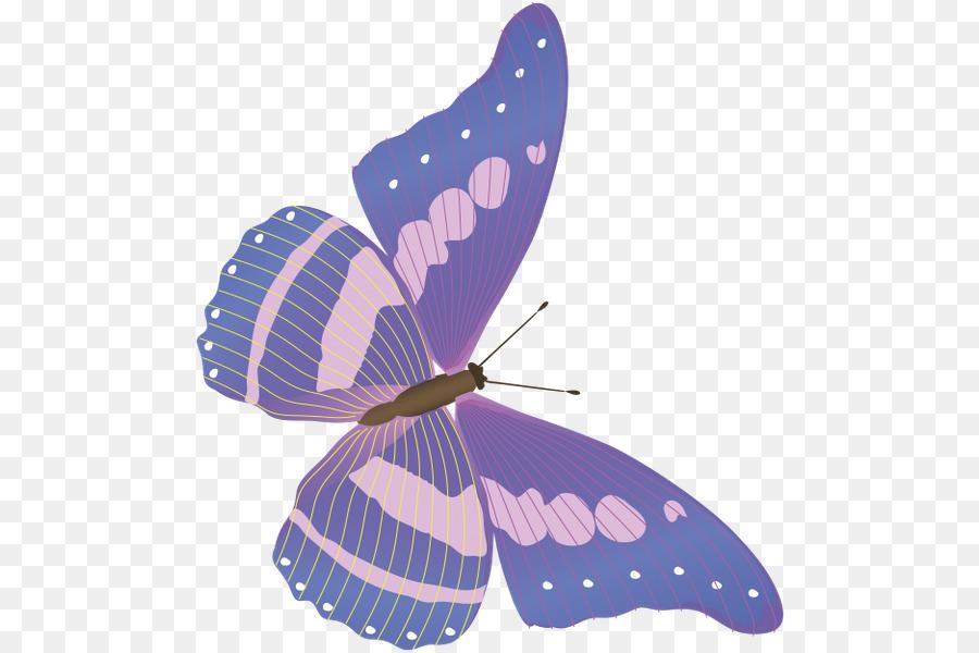 Бабочки стрекозы картинки детские