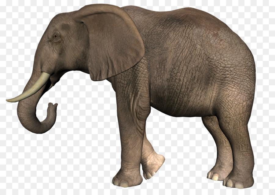 существуют картинки предметов слон впечатлит вас