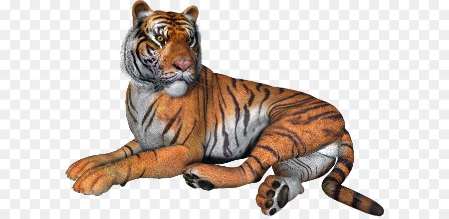 Февраля распечатать, картинки тигров анимация