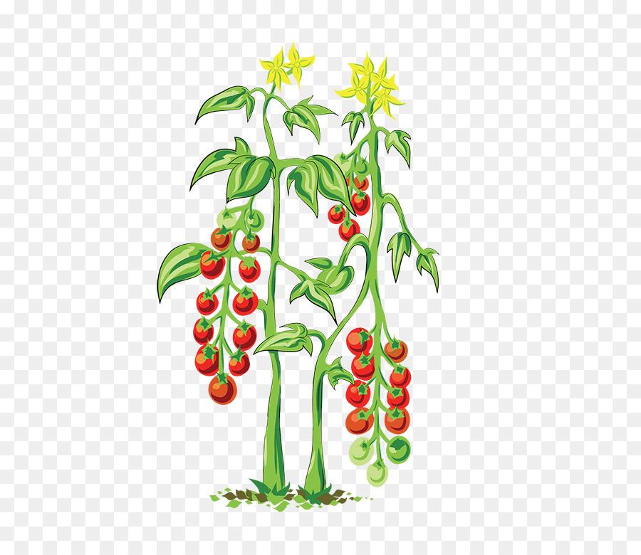 Куст помидора картинка для детей