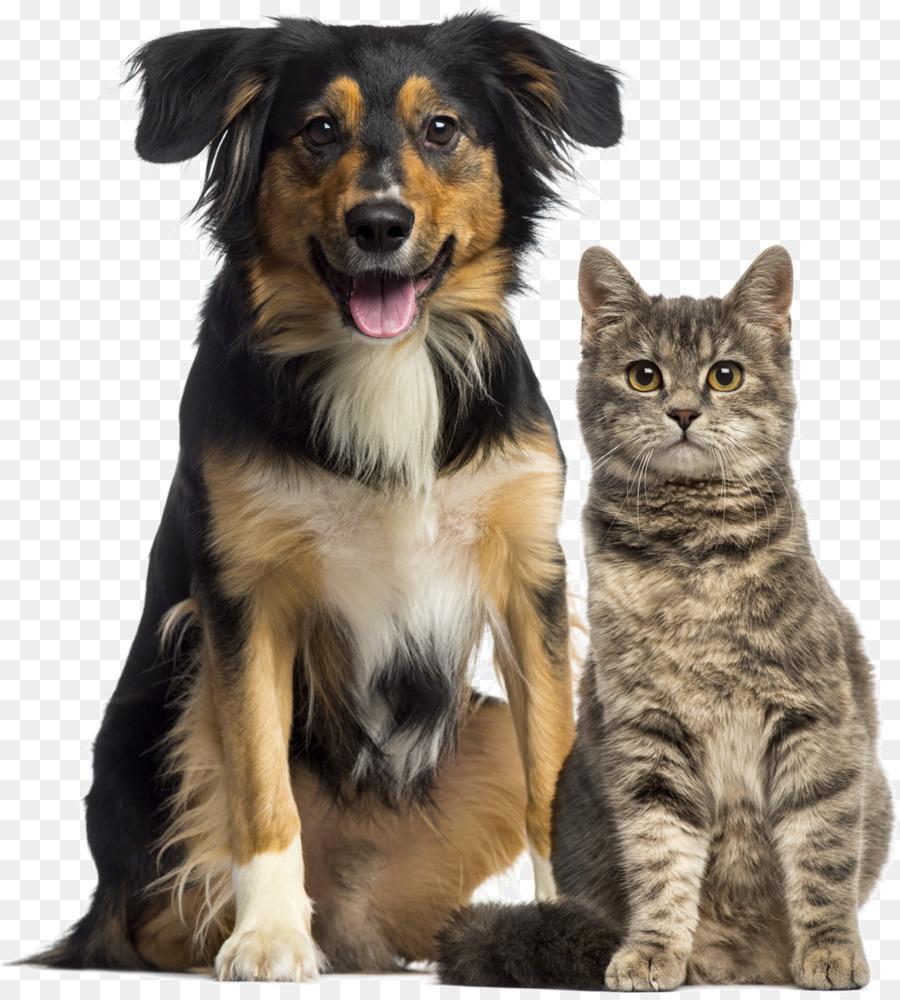 Домашние животные собака и кошка картинки