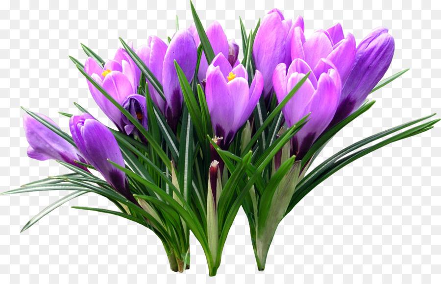 нарисовать картинки весенние цветы прозрачные артистка сделала