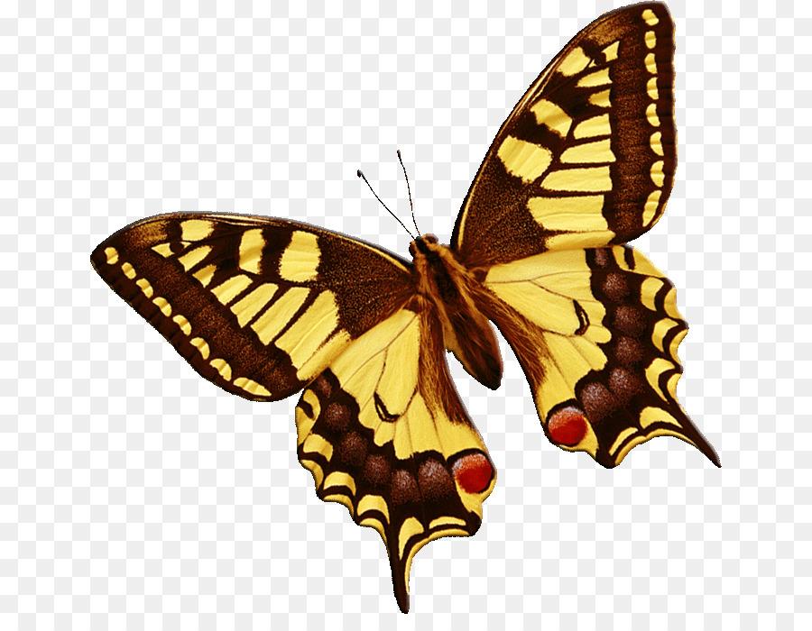 Картинки анимации бабочки летают, интересные рисунки