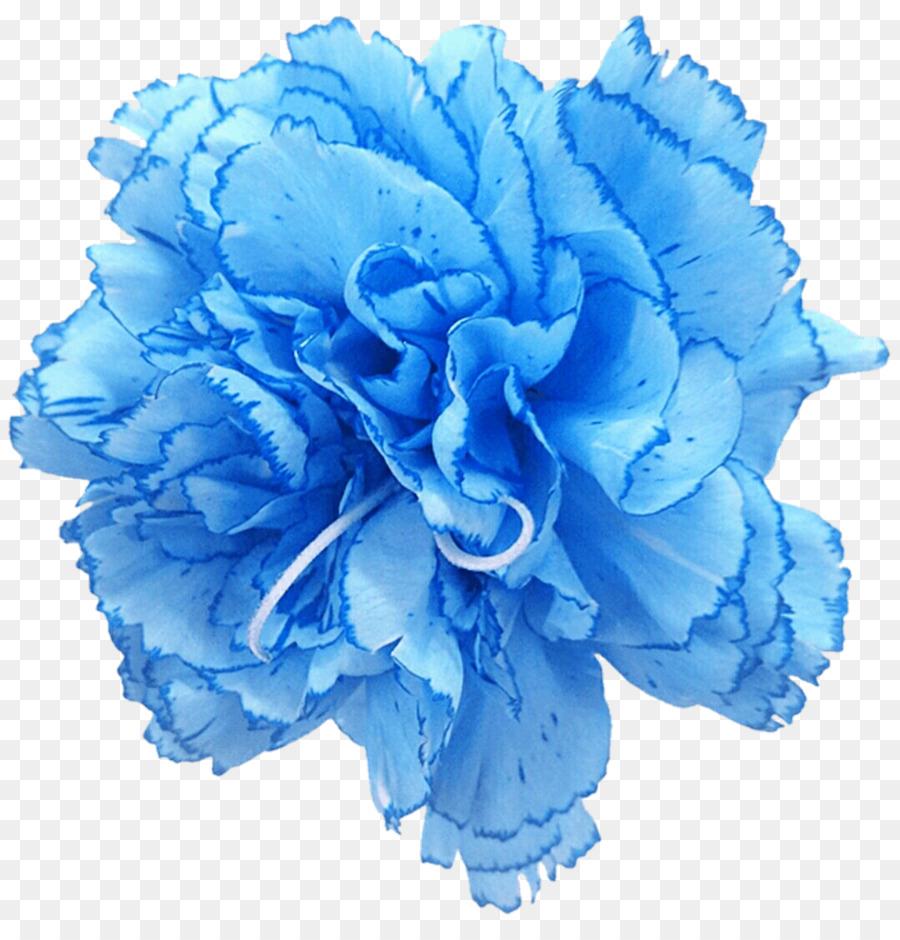 камелии синие гвоздики картинки еще