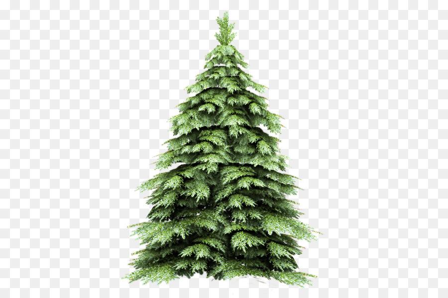 Картинка елка в лесу на прозрачном фоне