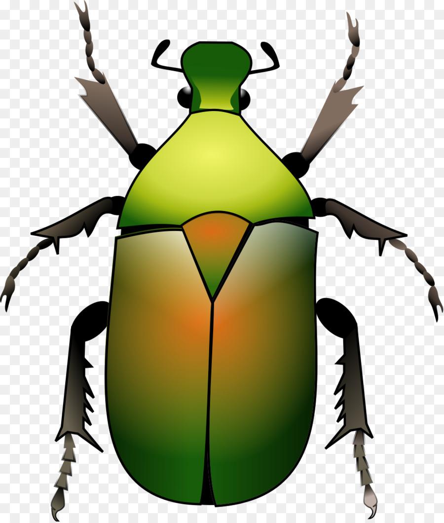 Картинка с рисунком жук