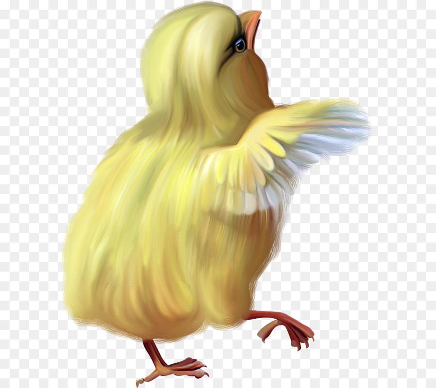 Картинка крыла цыпленка