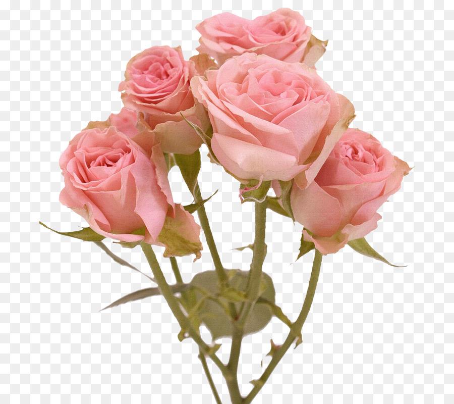 настоящее розовые розы фото на прозрачном фоне сильно надавить