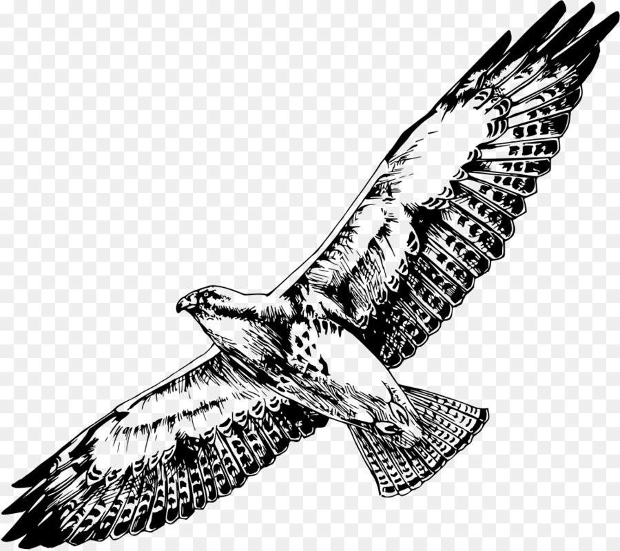картинки хищных птиц карандашом