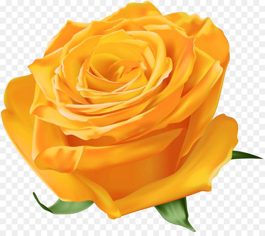 Картинки, картинки желтых роз на прозрачном фоне для фотошопа