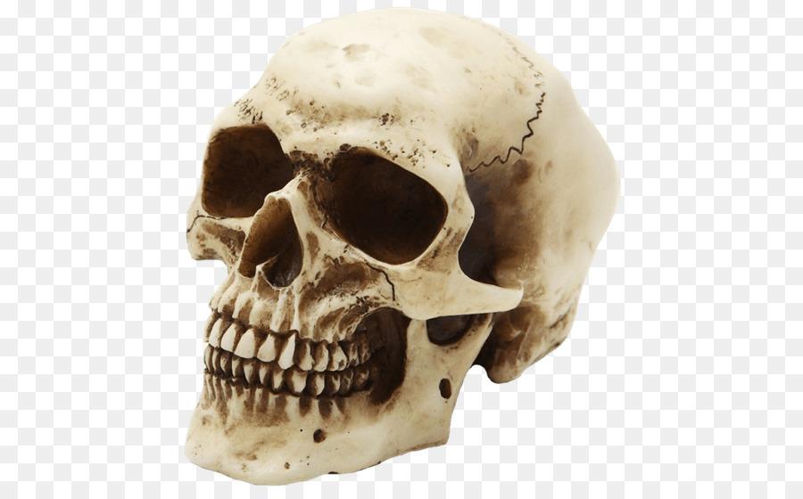 яркие, сходненский череп картинки сухом грунте