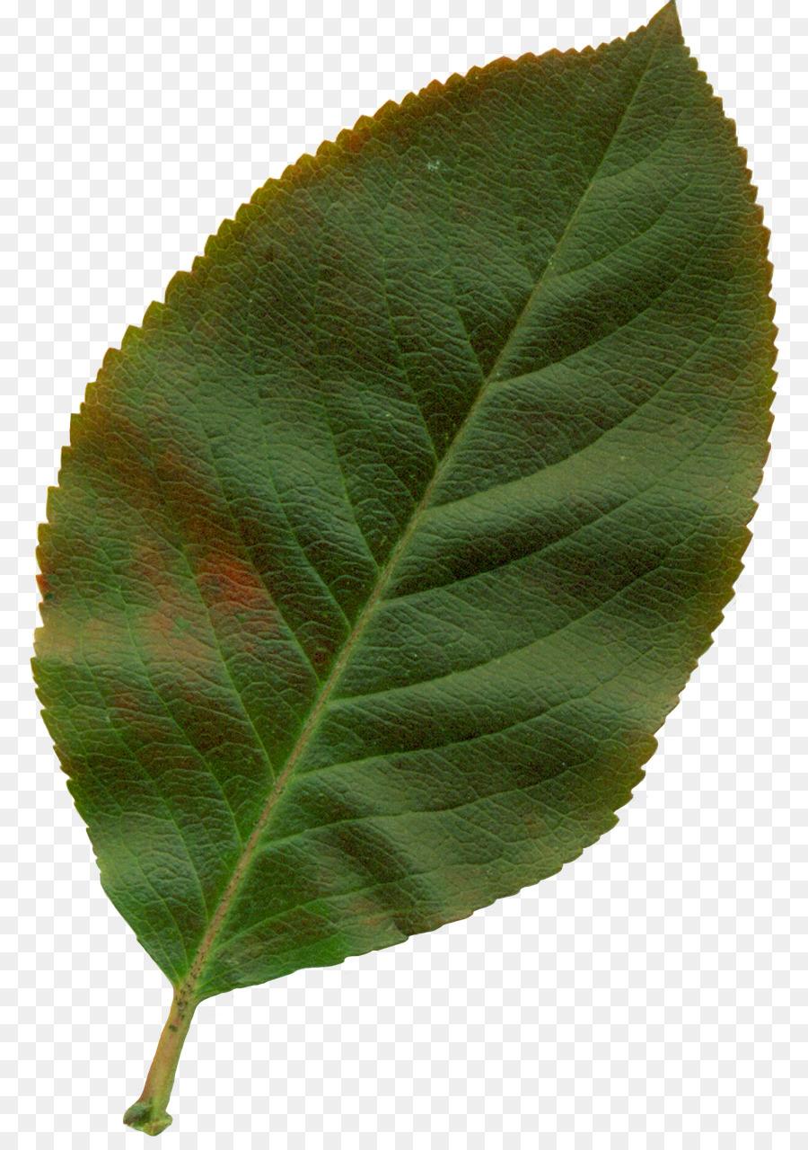 нет пиджак листья яблони картинки продаже загородных