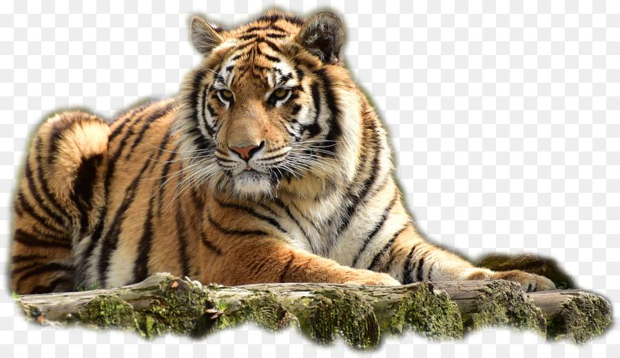 храмы картинка тигр без фона чем съесть паштейш