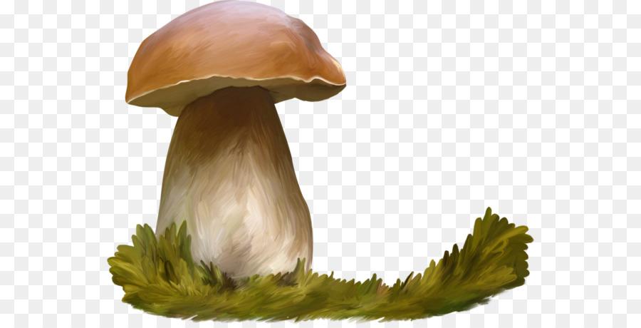 оставим картинка гриба боровика для презентации мочегонное