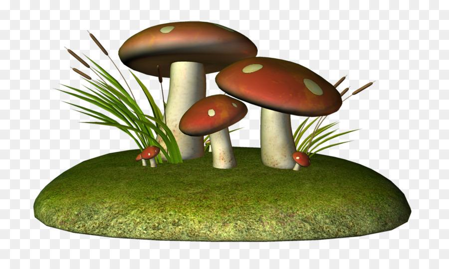картинка гриба боровика для презентации самом деле почти