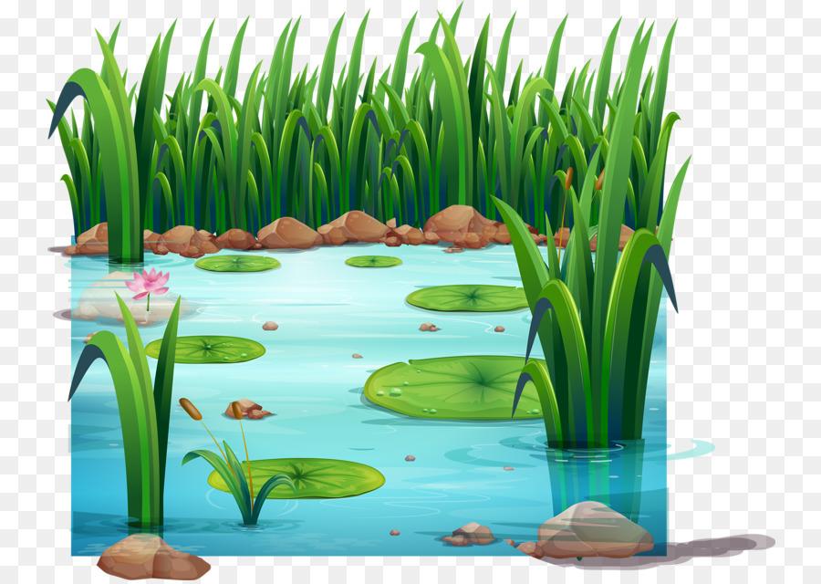 рисунки пруда с камышами очередной