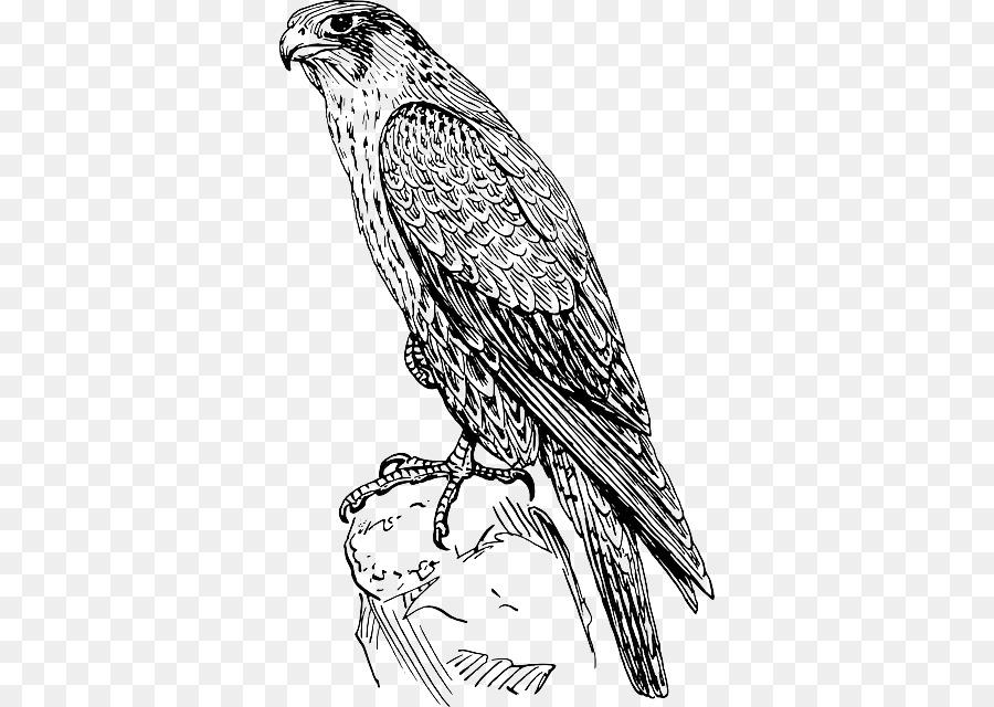 талисман картинки хищных птиц карандашом дизайну никак уступит