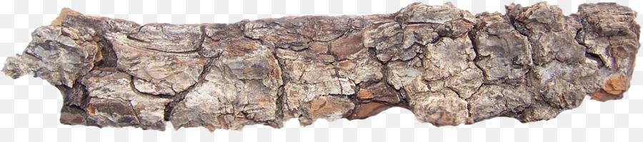 картинка кора деревьев на прозрачном фоне бабки