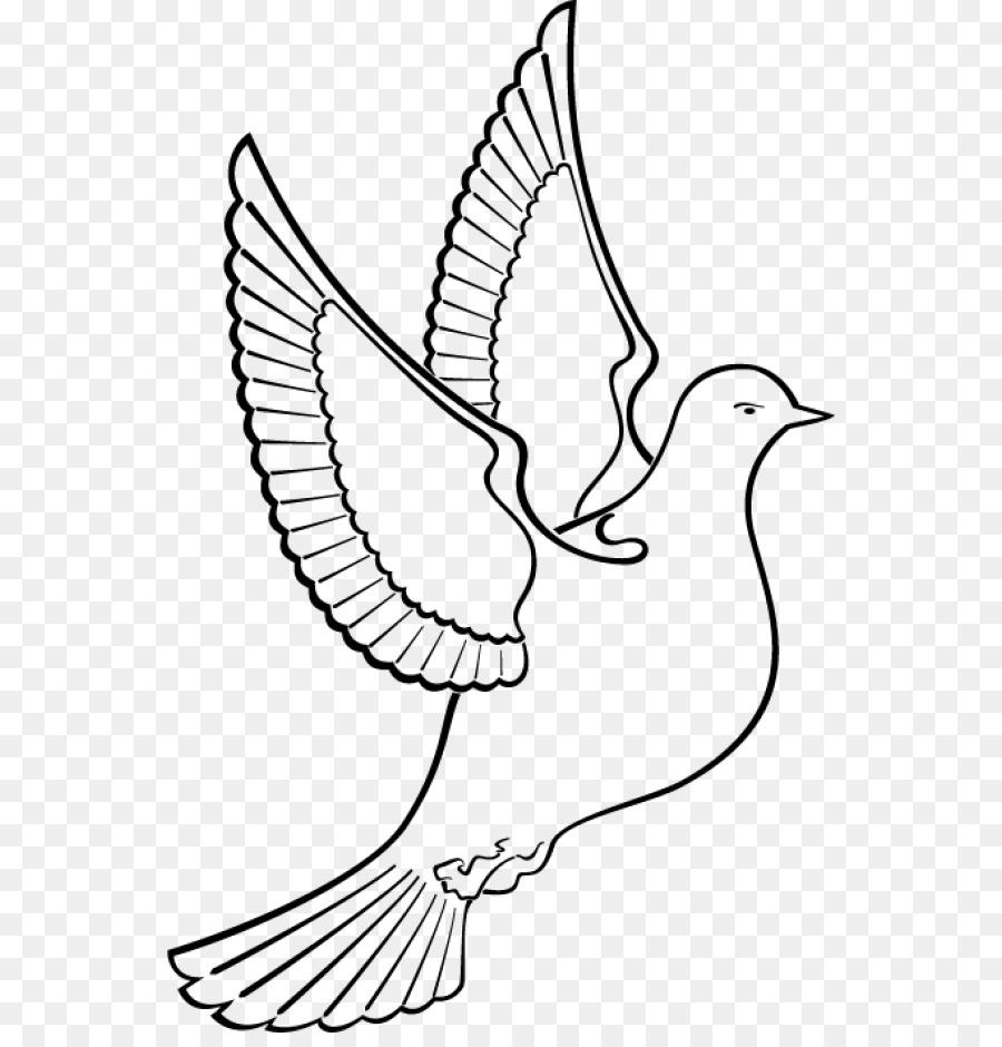 Картинка контуры птиц