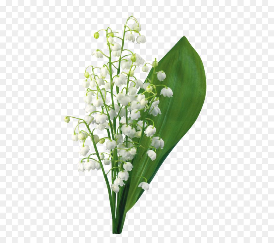 Картинки с надписью растения, картинки красивые