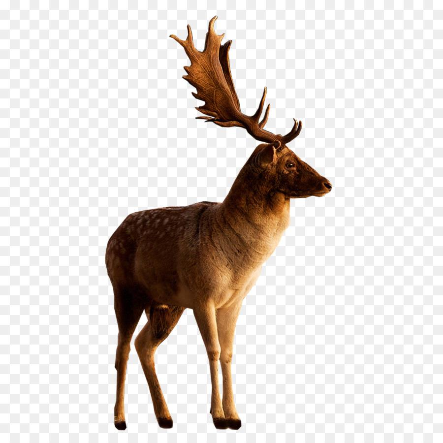 Картинки лесные животные на прозрачном фоне, новым