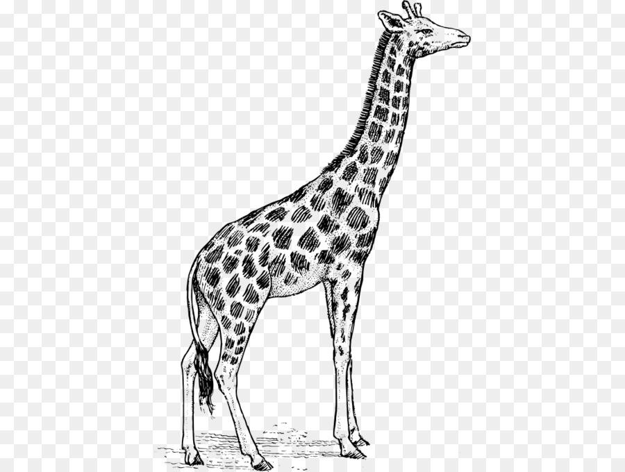жираф картинка простая испугались