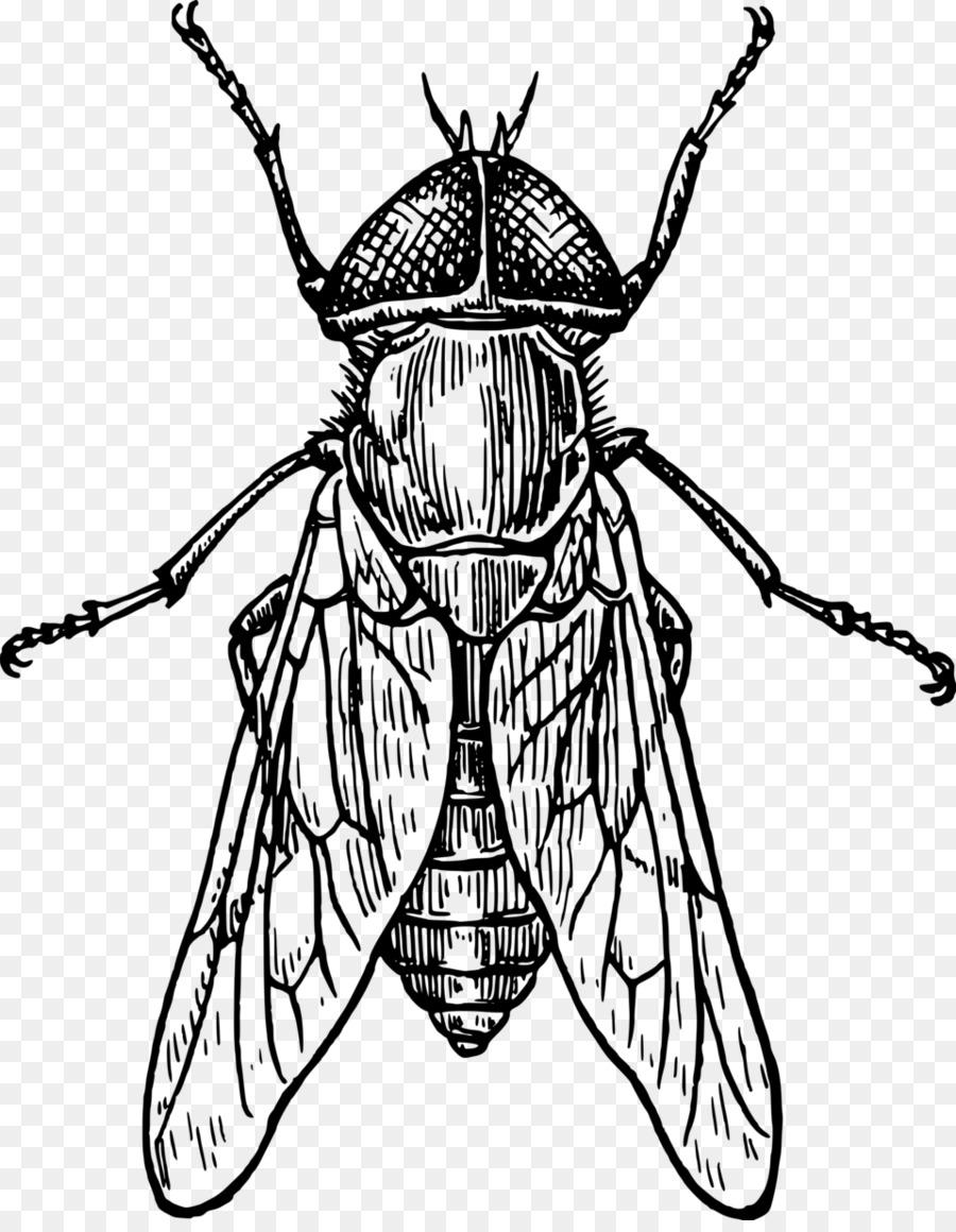 Рисунки картинки насекомых