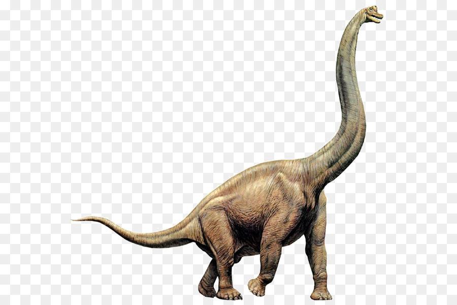 apatosaurus vs diplodocus - 640×600