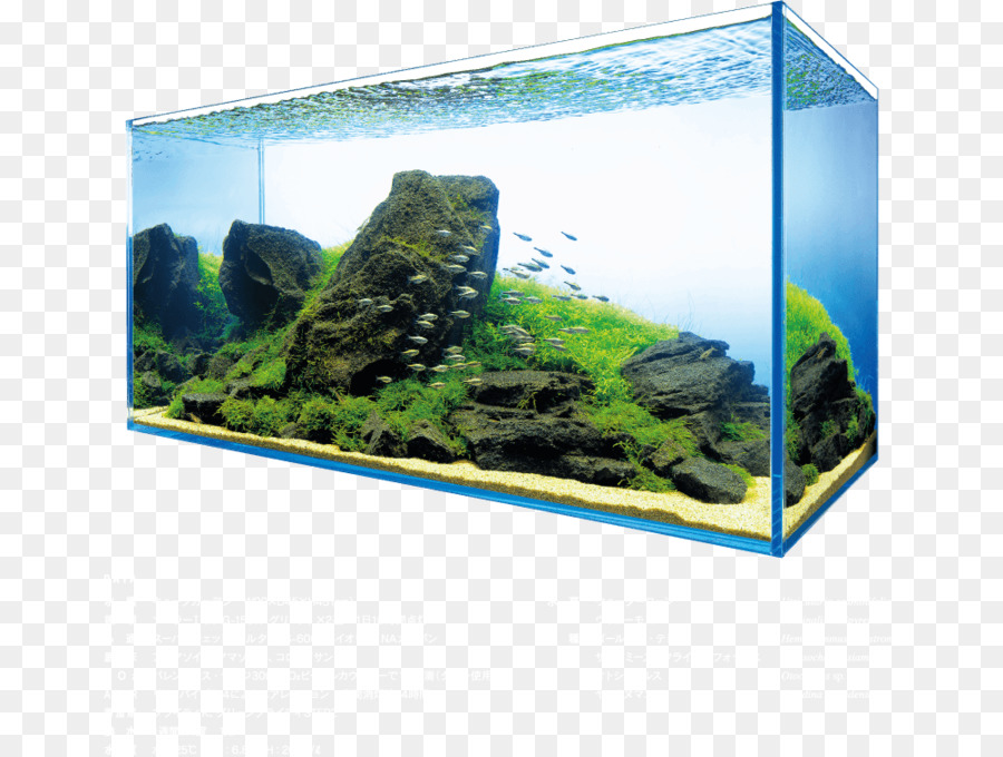 результате должна параллелепипедные аквариумы картинка автоспуск является полноценным