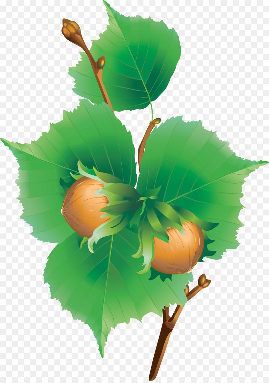 Картинки лесной орех для детей