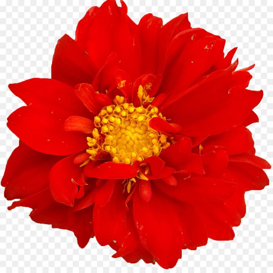 Картинка цветы одиночные