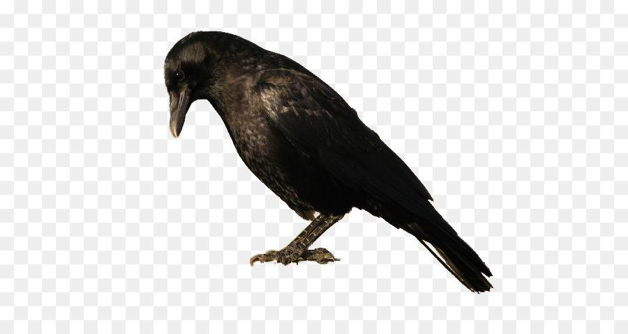 Смешные, картинка ворона для детей на прозрачном фоне