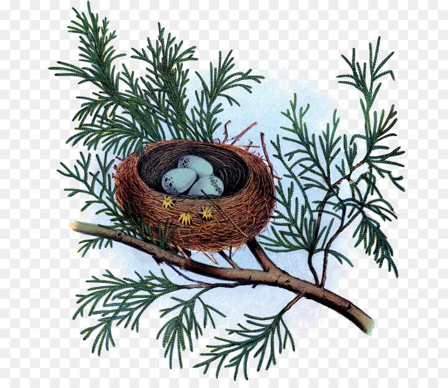 Картинки гнезд для детей