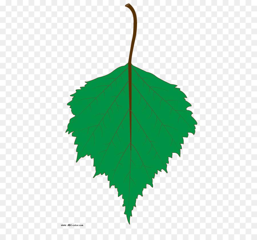 Листья березы картинки для детского сада
