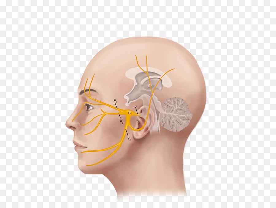 facial-nerve-trigeminal