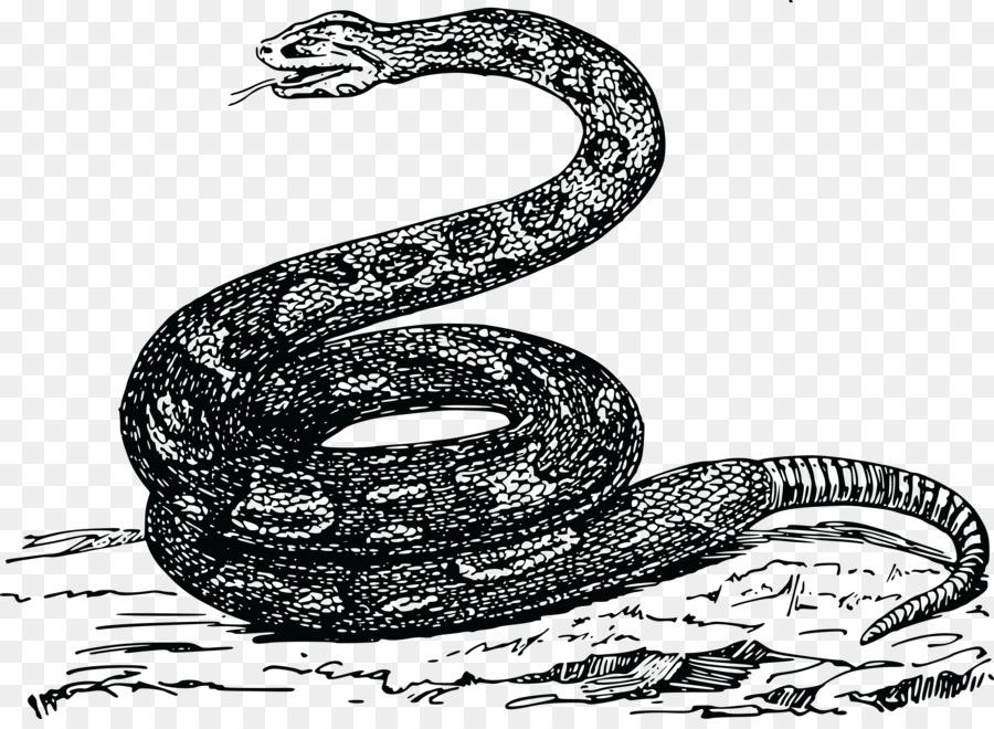 Рисунки ядовитых змей