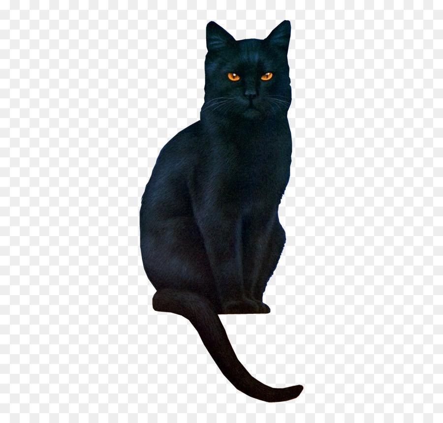 картинка черного кота без фона