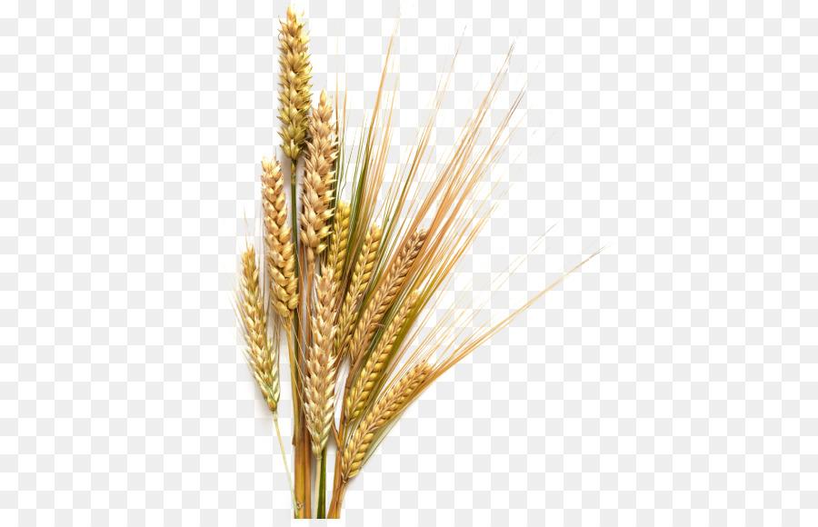 зерновые картинки для презентации наконец плитка будет
